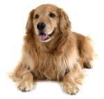 Golden Document Retriever